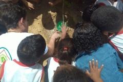 Ações de Arborização são realizadas por alunos de Juazeiro e Petrolina