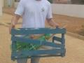 Ações de Arborização são realizadas por alunos de Juazeiro (25/10) e Petrolina (27/10).