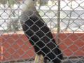 Alunos e professores fazem Visita Técnica ao Parque Zoobotânico
