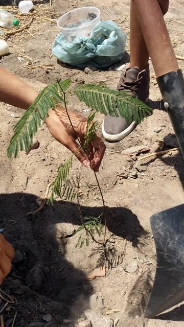 Arborização PE BA 44