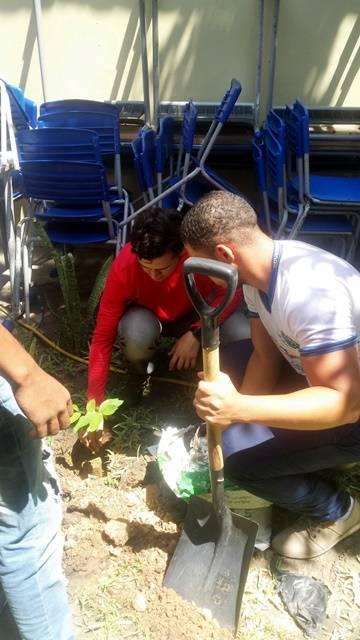 Arborização PE BA 66
