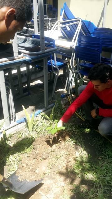 Arborização PE BA 67