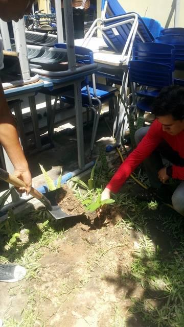 Arborização PE BA 68