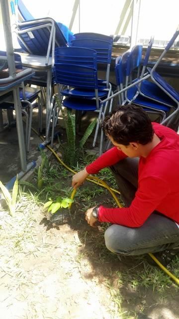 Arborização PE BA 69