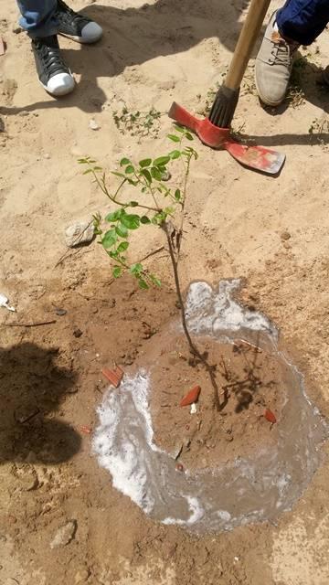 Arborização PE BA 76