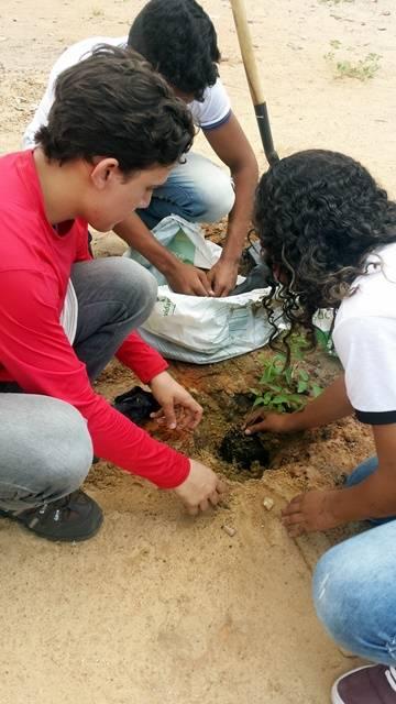 Arborização PE BA 82