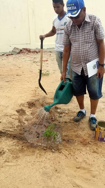 Arborização PE BA 86