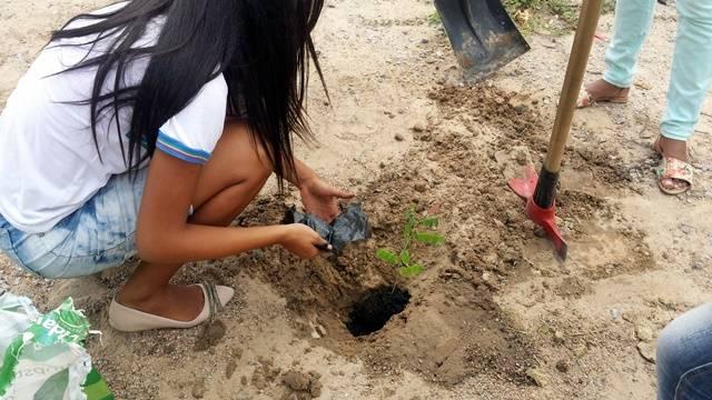 Arborização PE BA 91