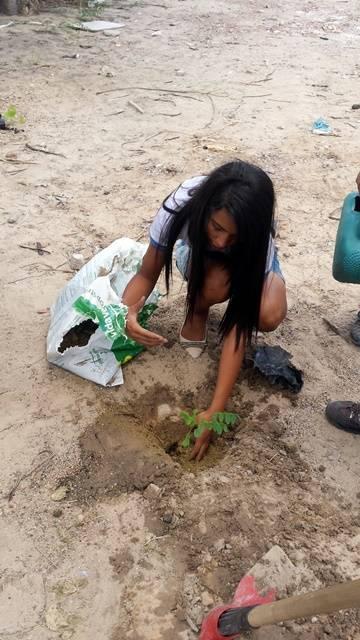 Arborização PE BA 93