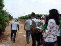 Alunos do Centro Territorial de Educação Profissional do Sertão do São Francisco (CETEP) realizaram visita técnica à Fazenda Best Fruit, no dia 16 de outubro. .