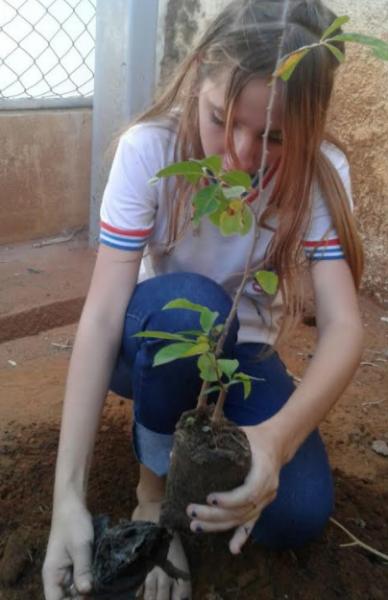 Atividades de Arborização. Escola Rotary Clube. Juazeiro-BA. 10/08/2017.