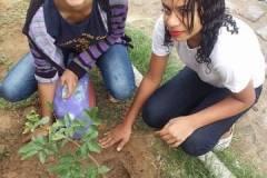 Arborização de Escolas e Residências