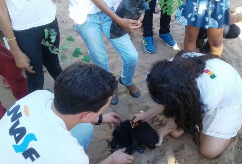 Atividades de Arborização. Escola Professor José Joaquim. Petrolina-PE. 25/05/2017.