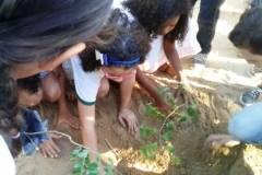 Arborização de escolas mobiliza alunos e professores