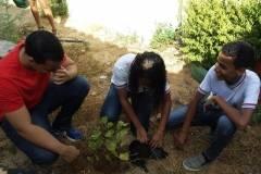Arborização de escolas mobiliza professores e alunos