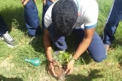 Arborização e horta escolar mobilizam escolas