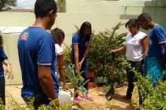Arborização mobiliza alunos e professores