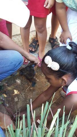 Atividades de arborização. Escola Iracema Pereira da Paixão. Juazeiro-BA. 16-04-2016