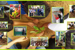 Arborização movimenta escolas