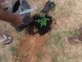 Plantio de Aroeira ocorreu no dia 7.04 na Univasf Petrolina.