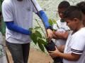 Atividades de Arborização. Escola José Joaquim. Petrolina-PE. 17-11-2016