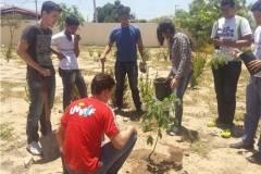 Arborizações movimentam escolas