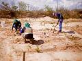 Atividade Arborização. UNIVASF - CCA. Petrolina-PE. 17/01/2020.
