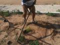Atividade Arborização. Bairro Alto do Cocar. Petrolina-PE. 18/01/2020.