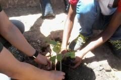 Atividades de arborização movimenta escolas