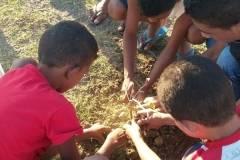 Atividades de arborização movimentam escolas públicas