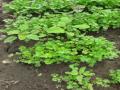 Atividade Jardinagem. Curso de Educação Ambiental Interdisciplinar. Juazeiro-BA,  Moreilândia e Petrolina-PE. Abril-Maio 2020.