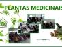 Atividades sobre plantas medicinais