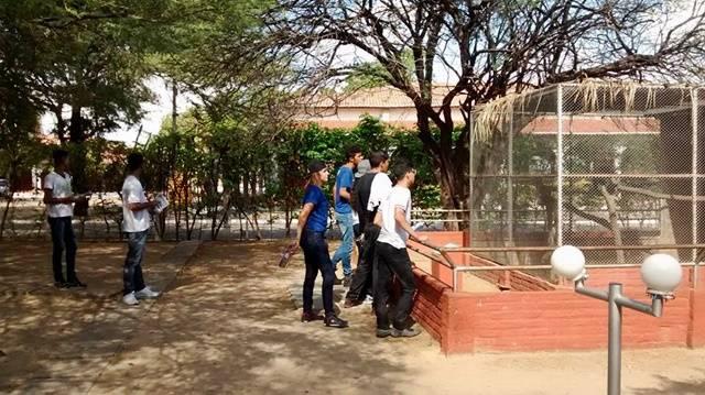 Animais da Caatinga 23