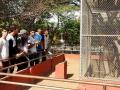 Animais da Caatinga 34