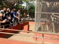 Animais da Caatinga 37