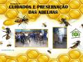 destaque abelhas