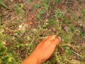 Atividade Horta Agrocológica. Petrolina-PE. 31/03/2020.