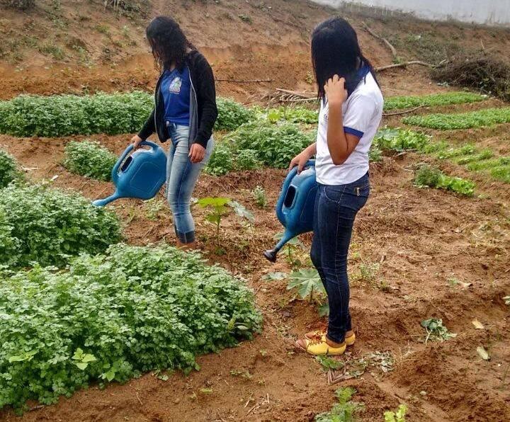 Atividades de Horta Escolar Agroecológica. Colégio Democrático Tancredo Neves (CODETAN). Senhor do Bonfim-BA. 24/05/2017.