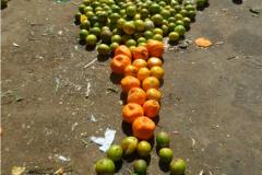 Desperdício de alimentos: a cara da fome no Brasil