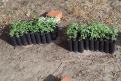 Em Campina Grande, PEV promove arborização e horta