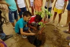 Escolas mobilizadas para arborização