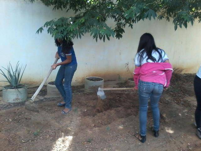 Atividade de horta escolar. Escola Antonilio de França Cardoso. Juazeiro-BA. 14-06-2016