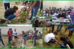 Escolas são mobilizadas para arborização