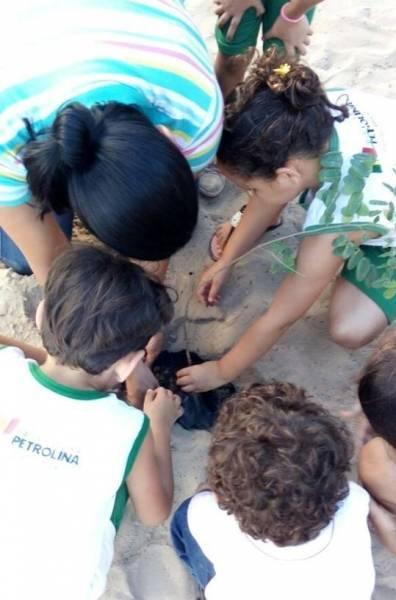 Atividades de Arborização. Escola Professora Maroquinha. Petrolina-PE. 19/04/2017.