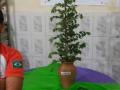 Evento sobre meio ambiente. Escola Luis Cursino. Juazeiro-BA. 28/07/2017.