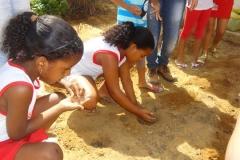 Hortas Escolares Agroecológicas