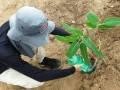 Atividade Arborização. UNIVASF CCA. Petrolina-PE. 01/03/2019