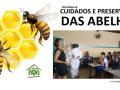 destaque abelhs