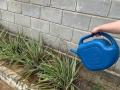 Atividades de Jardinagem nas residências. Projeto Escola Verde. Novembro de 2020.
