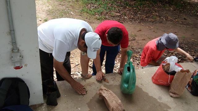 Minicurso Arborização e produção de mudas. Univasf. Primeiro Semestre de 2016
